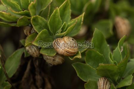 piccole lumache in mezzo ai cespugli