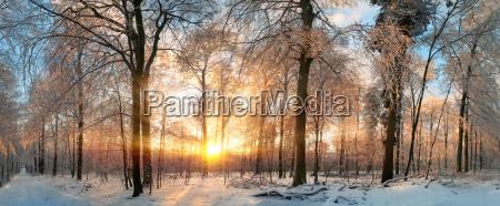 paesaggio invernale tramonto magico nella foresta