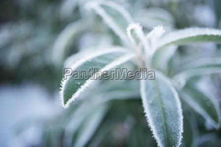 albero giardino inverno foglie ghiaccio gelo