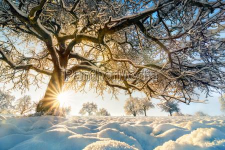 albero parco inverno paesaggio invernale neve