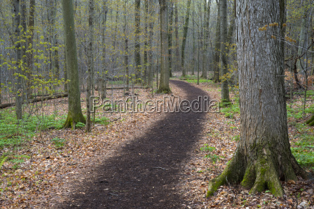 footpath through forest beaver lake nature