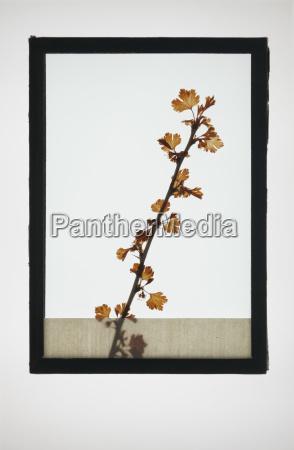 bicchiere foglia arte scienza fiore pianta