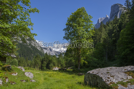 albero pietra sasso nuvola alpi austria