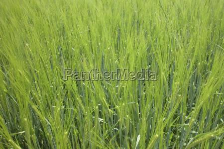 kolor zielony gospodarstwo rolnictwo pole lato