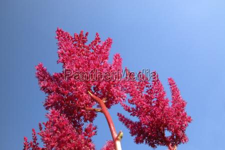 niebieski detal kolor drzewa rozkwitac kwitnienie