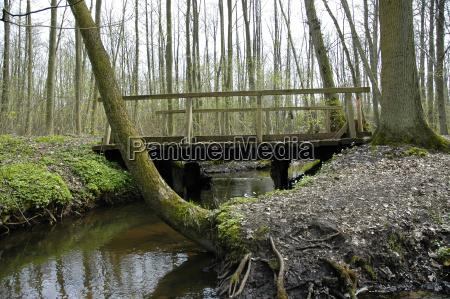 tree trees wood bridge conservation of