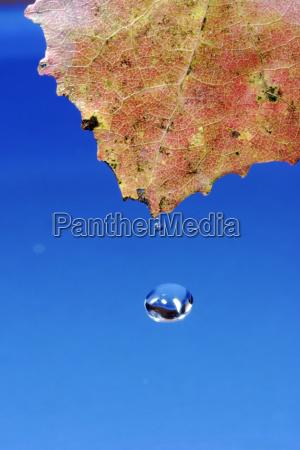 blue leaf leaves autumnal drop wet