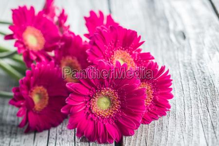 bello bella fiore pianta estate primavera