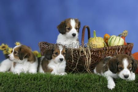 studio di registrazione animale animale domestico