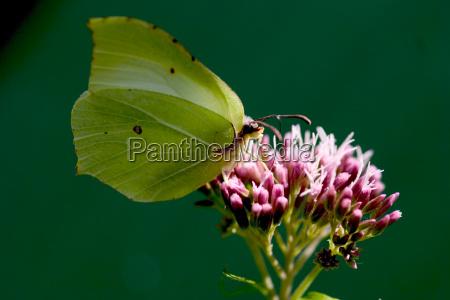 animale insetto insetti fauna farfalla animali