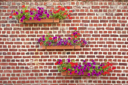 flowers on brick wall