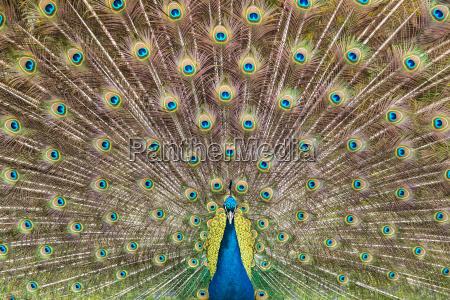 animale uccello fauna virile mascolino ritratto