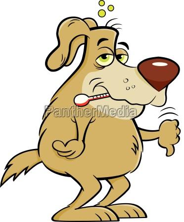 salute medico medicina animale animale domestico