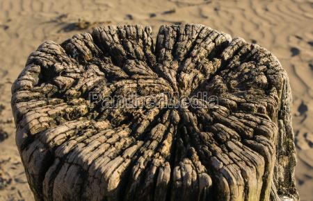 albero legno tronco intemperie eroso natura