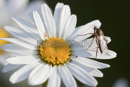 detail closeup flies animal insect flower