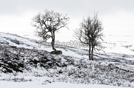 bald trees with some snow at