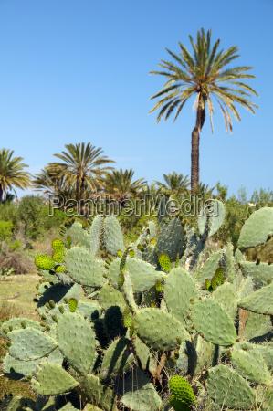 africa flora botanica nord africa tunisia