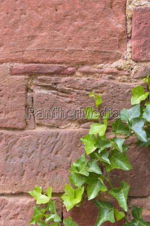 foglia primo piano close up pietra