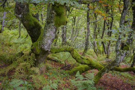 albero estate caucasico europeo europa francia