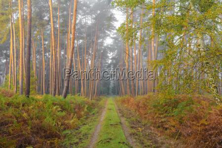 bello bella foglia albero selvaggio pino