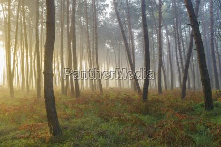 foglia albero selvaggio pino luce soleggiato