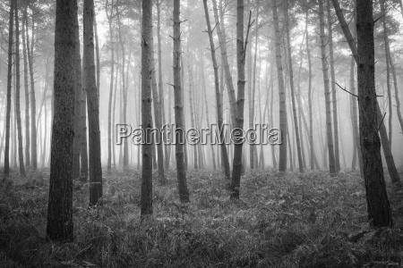 immagine in bianco e nero di