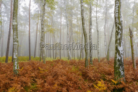 tronchi dalbero in una foresta di