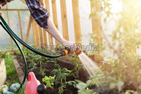 giardino pomodorini pomodori pomodoro piantina germe