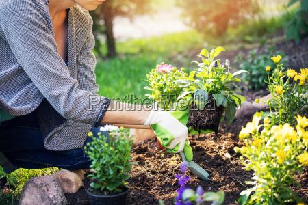donna che pianta i fiori di