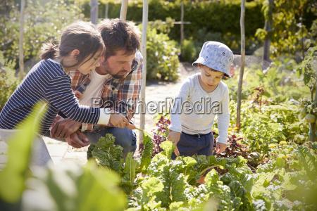 i bambini che aiutano il padre