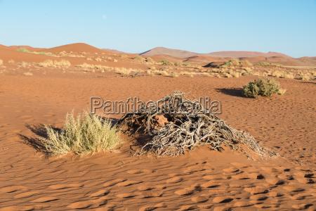 deserto africa namibia giro turistico erbe