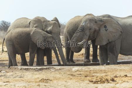 bere animale fauna parco nazionale africa