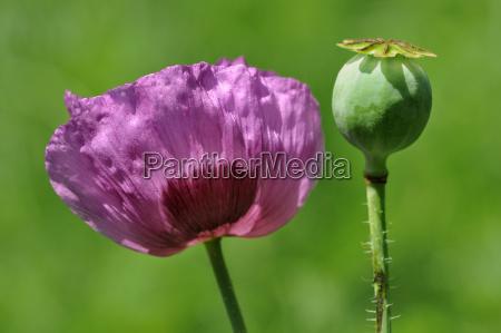 primo piano fiore pianta fioritura fiorire