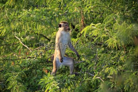 persone popolare uomo umano albero alberi