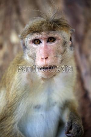 primo piano animale mammifero fauna parco