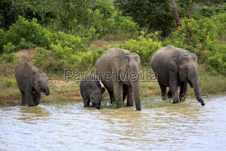 bere acque fauna parco nazionale asia