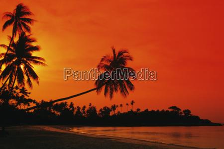 albero tramonto riva del mare spiaggia