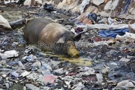 enorme ambiente animale mammifero animali perdita
