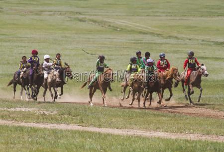 fauna asia mongolia cavallo cavalli mongolo