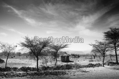 rilasciato albero alberi deserto africa nuvola