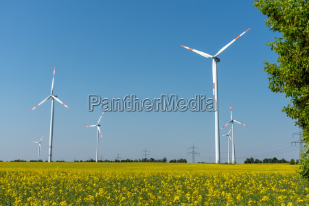 blossoming rapeseed field with wind turbines