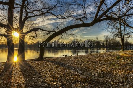 blu luce citta colore albero parco