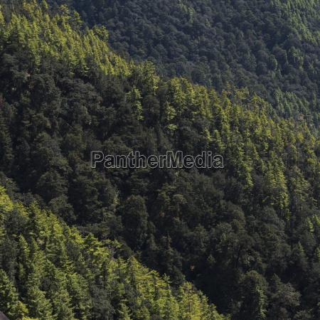 dense forest on a mountainside taktsang