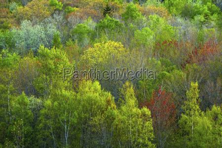 viaggio viaggiare colore albero colorato orizzontale