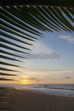 a coconut palm frond silhouette framing