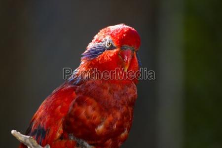 animale uccello selvaggio animali uccelli allaperto