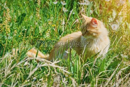 animale domestico peluche gatto gatta