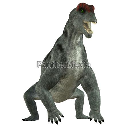 animale rettile lucertola dinosauro erbivoro preistorico