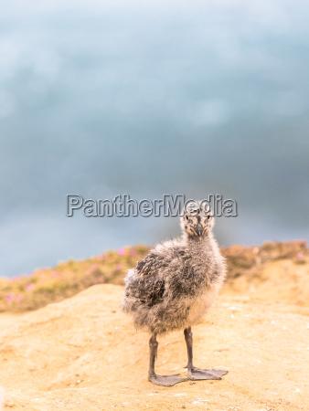 animale uccello natura cucciolo bambino pulcino