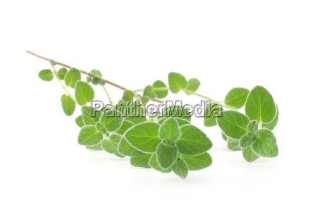 rilasciato foglie appartato isolato spezie fondale